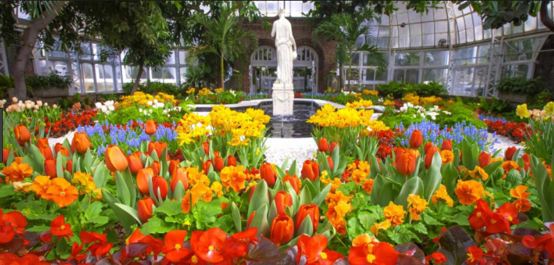Allegheny county retirees association spring flower show april 5 join us for the spring flower show scents of wonder at the phipps conservatory in oakland there will be thousands of aromatic lilies tulips daffodils mightylinksfo